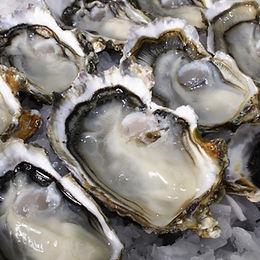 1/2 Doz New Zealand Coromandel Oyster