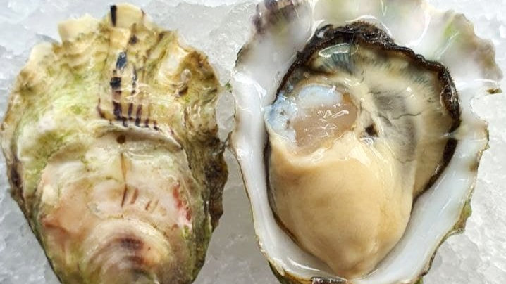 Beach Oysters