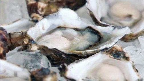 "Tasmanian Oysters 4.5"""