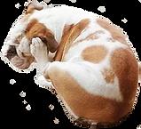 kaku 犬.png