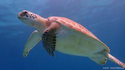 Turtle-3 eascuba [1280x720]