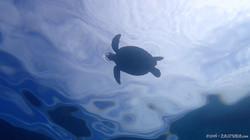 Turtle-2 eascuba [1280x720]