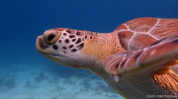 Turtle eascuba [1280x720]