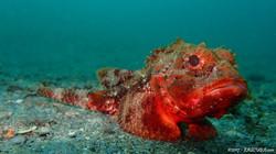 Orange Scorpin Fish eascuba17 [1280x720]