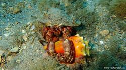 Hermit Crab-4 eascuba17 [1280x720]
