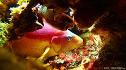 Spanish Hog Fish eascuba [1280x720]
