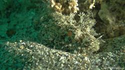Scorpion Fish-4 eascuba17 [1280x720]