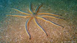 Sea Star 9 Leg eascuba17 [1280x720]