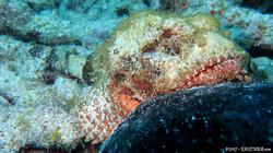 Scorpion Fish-2 eascuba17 [1280x720]