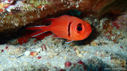 Little Red-2 eascuba [1280x720]