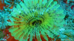 Feather Duster 2 eascuba17 [1280x720]