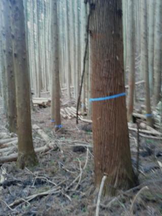 「洞仙寺の森」― 間伐下見調査 ―