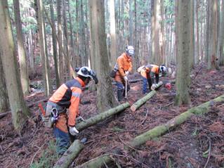 樹木の間伐