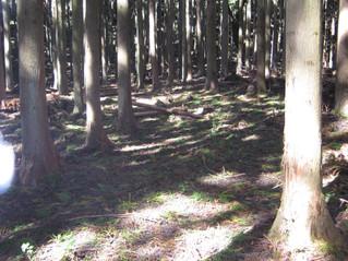 洞泉寺の森整備