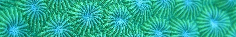 Living_Oceans_Education_edited.jpg