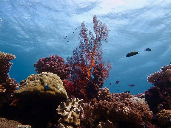Fiji Reef.jpg