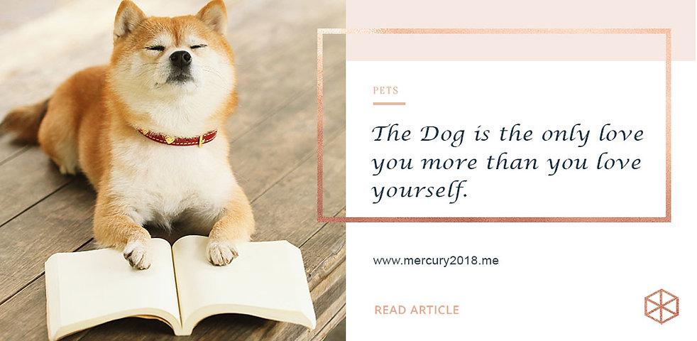 Pets cover June 19.jpg