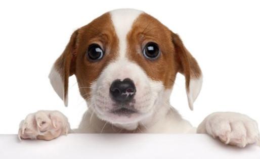 主人不在家,狗狗分離焦慮的表現?!