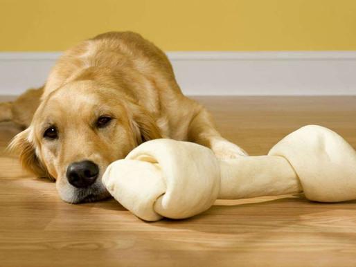 主人不在家,狗狗有分離焦慮表現的解決方法!