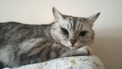 【與你分享我的懷孕經歷】胖貓貓與懷孕中的我