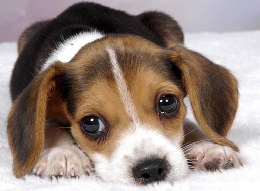 狗狗一直在你身邊跳來跳去,特別黏人,為什麼狗狗喜歡黏人?