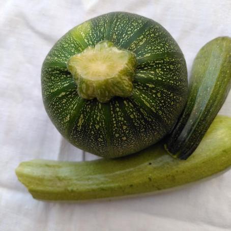 Zucchini- passt immer