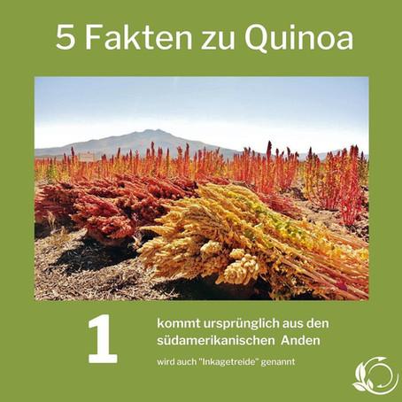 Quinoa- das Inkakorn aus der Börde