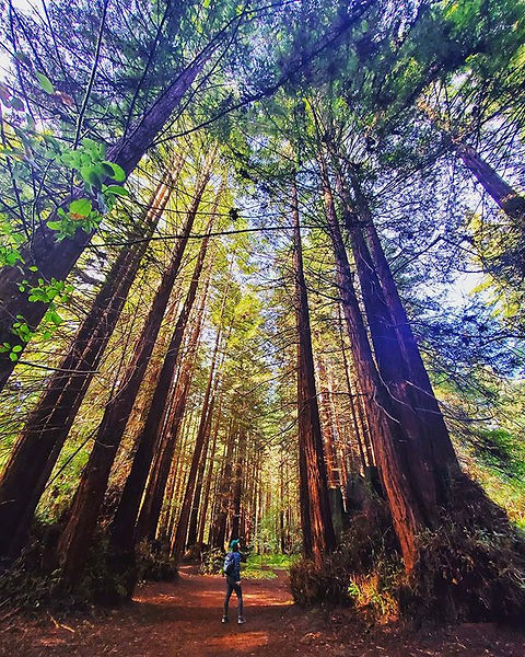 _The redwoods, once seen, leave a mark o