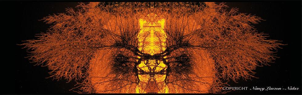 papillons-nuit-2t1.jpg