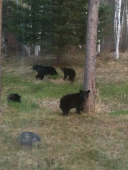 Our neighbors stopping by