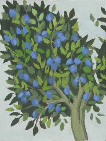 Plum Tree (Tacuinum Sanitatis)