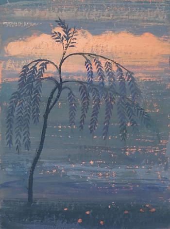 Willow (Rajasthan)