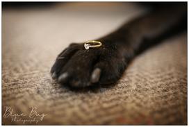 Blue Bug Phototography Dog
