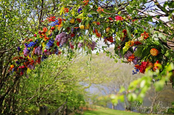 Blue Bug - Flower Arch