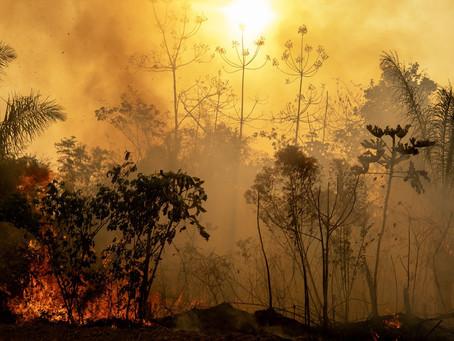 """Amazônia: semanas depois de """"dia do fogo"""", floresta ainda queima no Pará"""