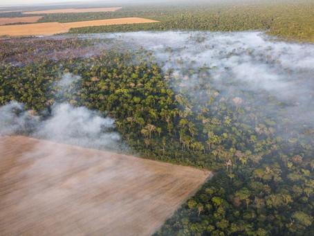 Fogo na Amazônia contribui para névoa escura nas cidades