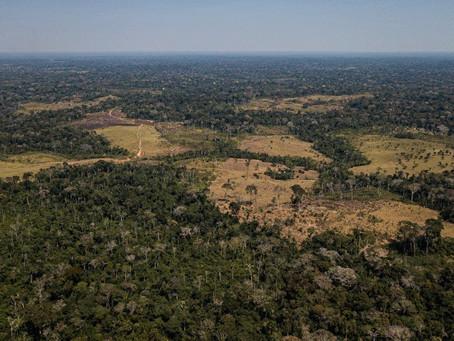 Fotos retratam a destruição da Amazônia na Reserva Chico Mendes