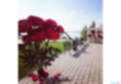glikbergflowers.jpg