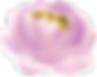 cream-pink-flower-7.png