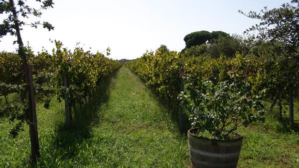 ng_wine_04.jpg