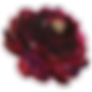 burgundy-flower-3.png