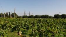 ng_wine_03.jpg