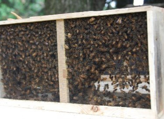 ($40 Deposit on $145)2021 3lb. Package with Fat Bee Mans Bees & Queen