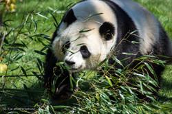 Zoo de Beauval 2014
