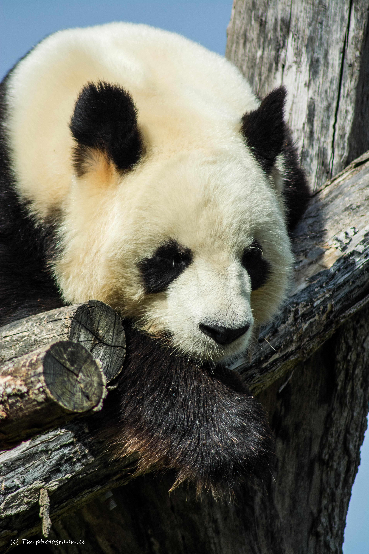 Zoo de Beauval 2016