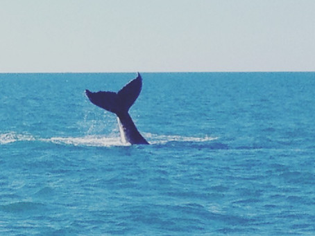 鯨が台所から見える