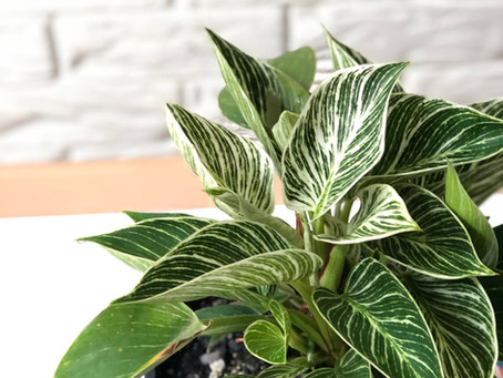 エコ&スピ=植物