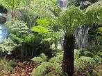 nolegio piante a milano per bosco