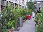nolegio piante per eventi a Mialno