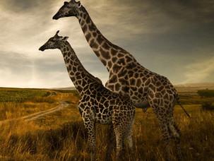 Safari i Sør Afrika
